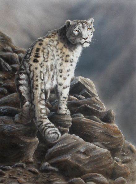 Lumileopardi Snow leopard