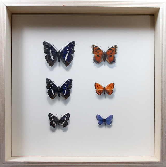 Perhoskokoelma Butterfly collection
