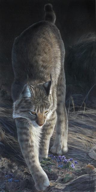 Ilves, Eurasian Lynx, Hanna Aalto